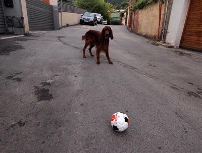 Chutarle una pelota a Mel #1