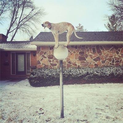 El perro, ese sufrido amigo